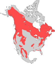 American Black bear map with borders removed.png