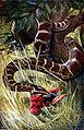 Americana 1920 Python.jpg