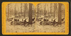 Among the pines, by Zimmerman, Charles A., 1844-1909.png