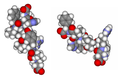 Angiotensins I and II comparison.png