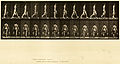 Animal locomotion. Plate 29 (Boston Public Library).jpg