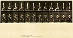 Animal locomotion. Plate 29 (Boston Public Library).jpg