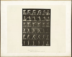 Animal locomotion. Plate 526 (Boston Public Library).jpg