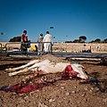 Animal sacrifice at Eid at Adha 15.jpg