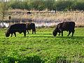 Animals in nature reservation.JPG