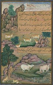 Animals of Hindustan small deer and cows called gīnī, from Illuminated manuscript Baburnama (Memoirs of Babur).jpg