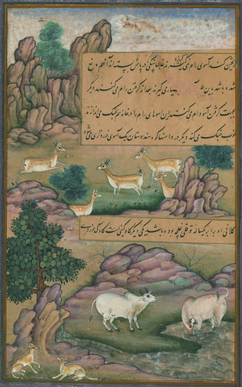 Animals of Hindustan small deer and cows called gīnī, from Illuminated manuscript Baburnama (Memoirs of Babur)