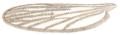 Anopheles claviger wing John Curtis British Entomology 210.png