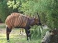 Antwerp Zoo (9691144033).jpg