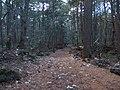 Aokigahara Forest (10863271994).jpg
