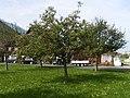 Apfelbaum.3507.JPG