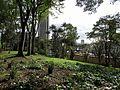 Arboles Parque de La Independencia.JPG