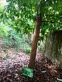 Arbre Pomme rose au Jardin des Plantes et de la Nature.jpg