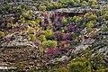 Arghavan valley, Ilam 2020-04-15 04.jpg