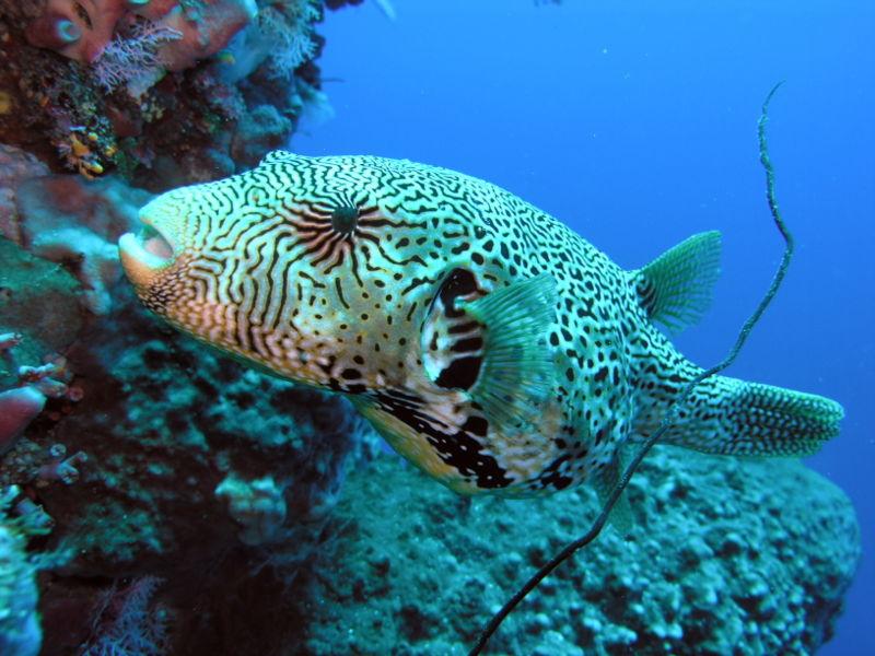 Exotic Beauties: Extremely Unique Aquatic Pets