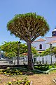 At Santa Cruz de Tenerife 2019 44.jpg