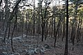 Athens-Big Fork Trail 1.jpg