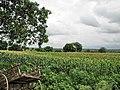 Aurangabad Fields (457048711).jpg