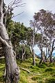 Australia - Part 2 (27446515021).jpg