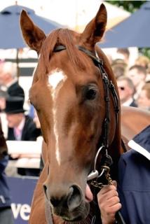 Australia (horse) British-bred Thoroughbred racehorse