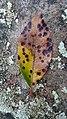Autumn Leaf on Treetrunk.jpg