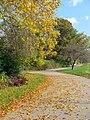 Autumn Leaves (1800540162).jpg