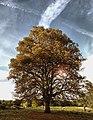 Autumn Trees (48660664).jpeg