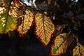 Autumn in iran پاییز در ایران- استان قم 10.jpg