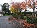 Autumn leaves, Omagh - geograph.org.uk - 1545083.jpg