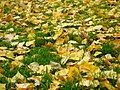 Autumn leaves (282681225).jpg