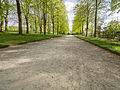 Avenue in the springtime (14151231725).jpg
