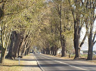 Bacchus Marsh - The Bacchus Marsh Avenue of Honour, a Elm tree lined avenue forms the main entrance to the CBD from the east.