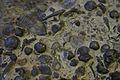 BLW Wenlock limestone.jpg