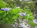 Bahamas 2009 (3425538035).jpg