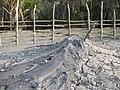 Baratang mud volcano.jpg