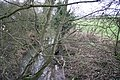 Barkby Brook near Beeby, Leicestershire - geograph.org.uk - 108331.jpg