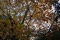 Basildon Park (6320501792).jpg