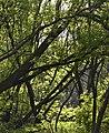 Bay Beach Wildlife Sancuary - panoramio.jpg