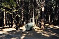 Bear trap set out in Yosemite National Park. (655190a67e9e412282760c7d66279b29).jpg