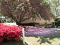 Beautiful Easter Sunday in Greenville, SC - panoramio.jpg