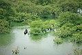 Beautiful bangladesh Raatargul 4.jpg
