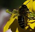 Bee (210150277).jpeg