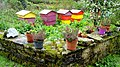 Beehives, Drumkeelan - geograph.org.uk - 1297695.jpg
