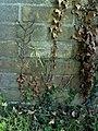 Benchmark on garage beside ^11 Appleford Drive - geograph.org.uk - 2071477.jpg