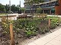 Beplanting Plein winkelcentrum Heksenwiel DSCF7465.jpg