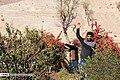 Berberis 13960722 07.jpg