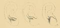 Bertillon - Identification anthropométrique (1893) 062.3.png
