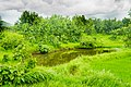 Bhiwali Near Ganeshpuri,Vasai, Maharashtra - panoramio (21).jpg