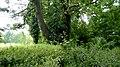 Biechowo - stary ewangelicki cmentarz - panoramio (4).jpg