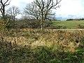 Big Clinch wood - geograph.org.uk - 606147.jpg